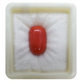 Astrological Coral Fine 17+ 10.5ct